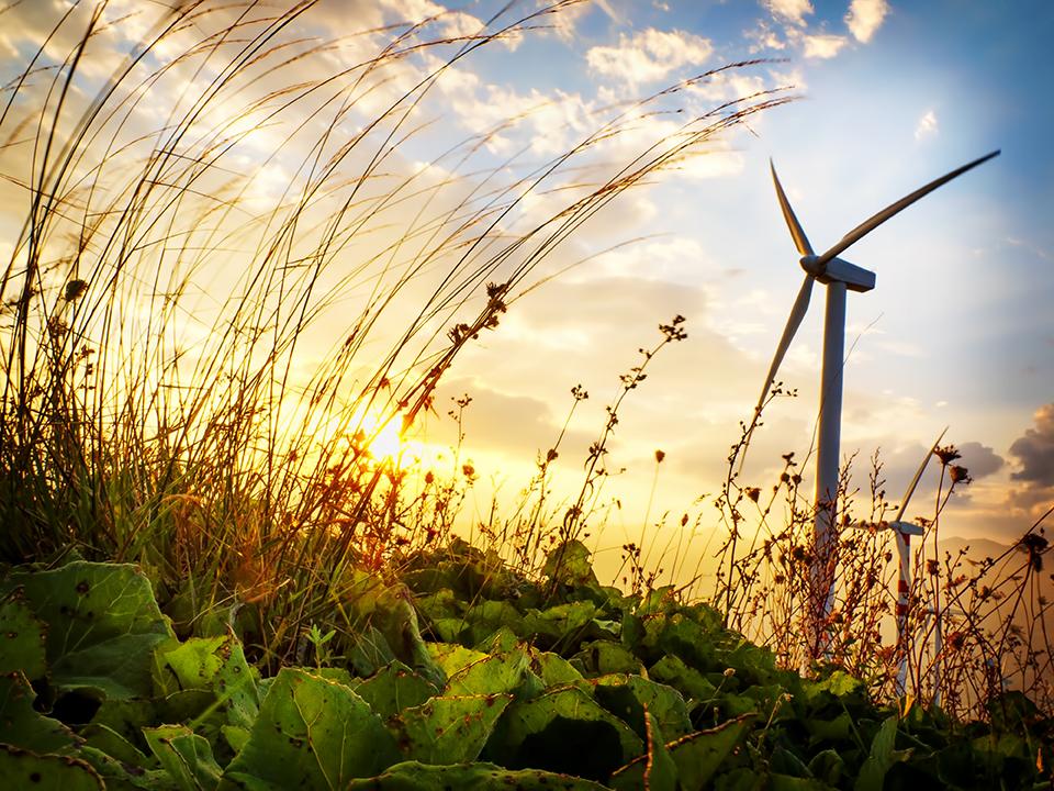 """Neoenergía ha lanzado bonos """"verdes"""" por un valor de 345 millones de dólares"""